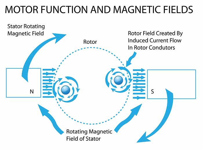 Motor function and magnetic fields