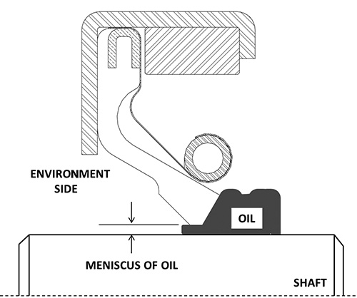 Formation of meniscus of oil under the lip