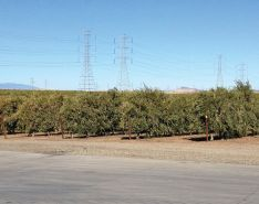 California Olive Ranch Chooses Stainless Steel for Harsh Production